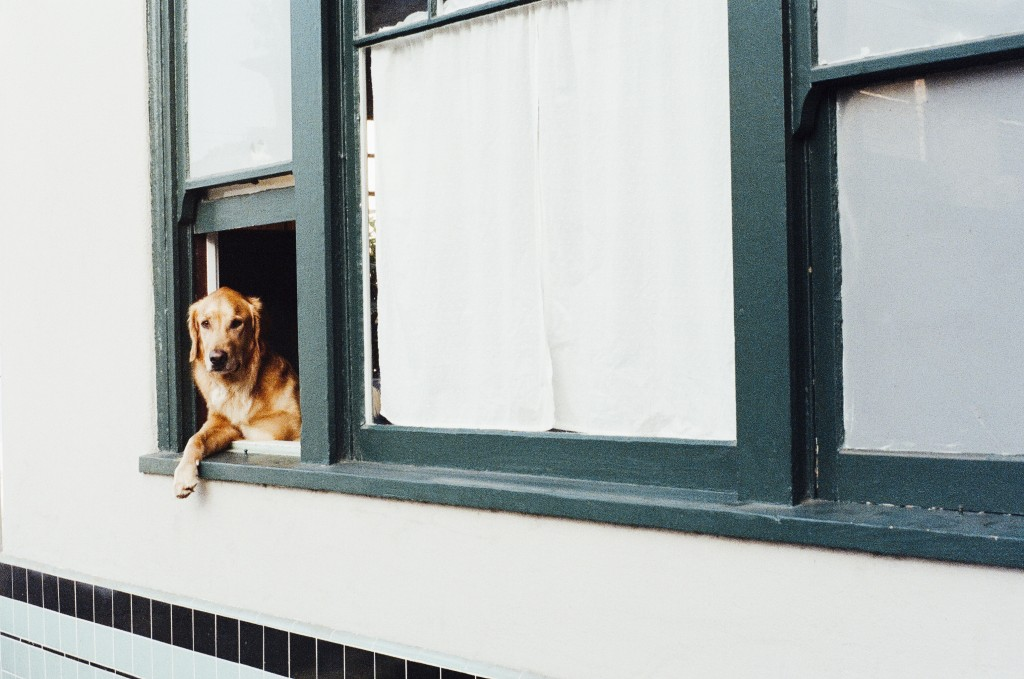 Guard Dog vs Home Security System